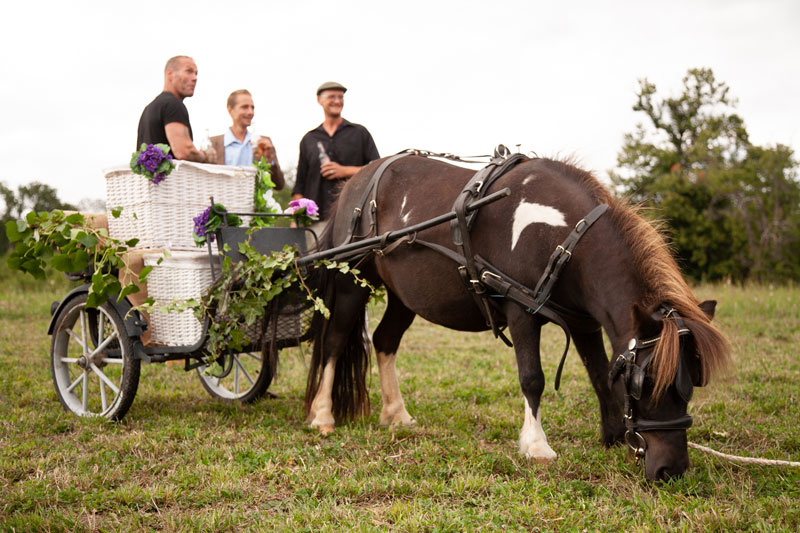wedding horse with cart